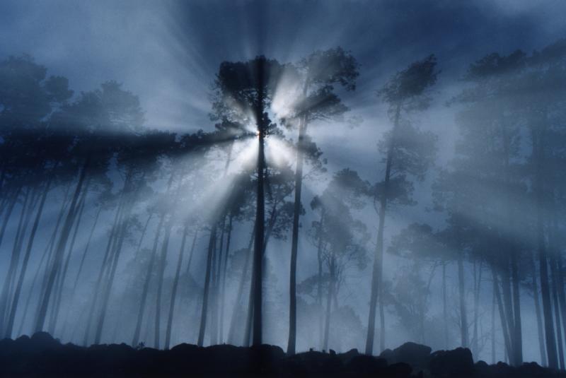 Slike za danas - Page 3 13_rays_fog_trees_rmb