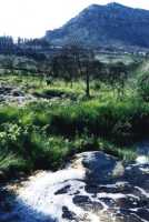 stream and grass in Silvermine