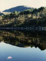 reflections in Silvermine Nature Reserve reservoir