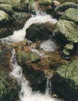 river over rocks in Newlands Forest