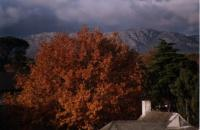 autumn tree with dark cloud and Muizenberg Mountain