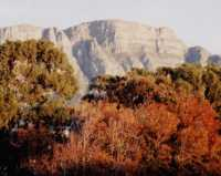 autumn colours in front of Table Mountain